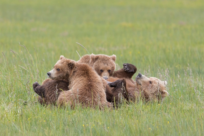 Brown Bear Photography Tours