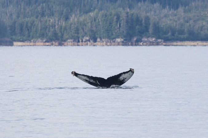 Alaska Whale Watching Cruise With Discovery Voyages
