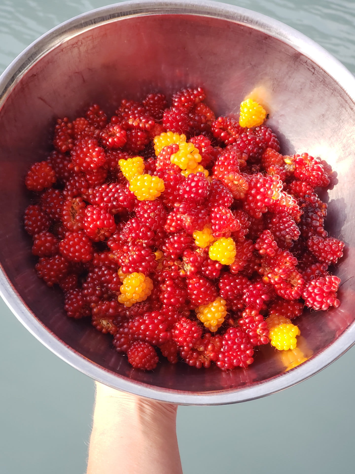 Wild AK Salmon Berries
