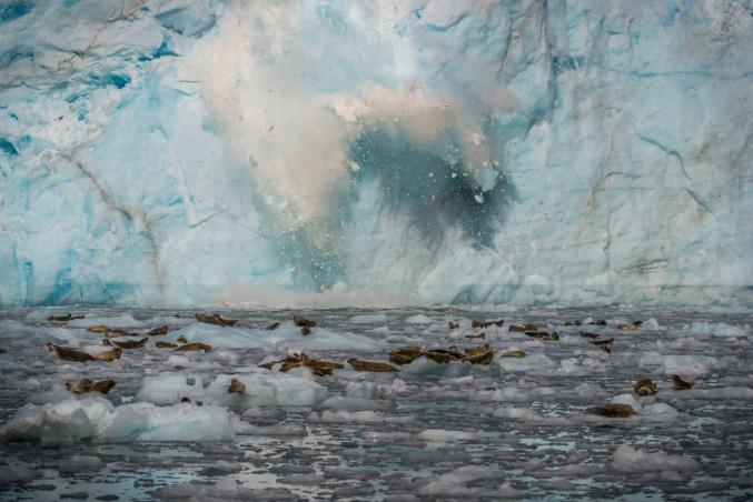 Calving Glaciers AK