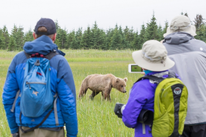 Brown Bear Photo Tours Lake Clark