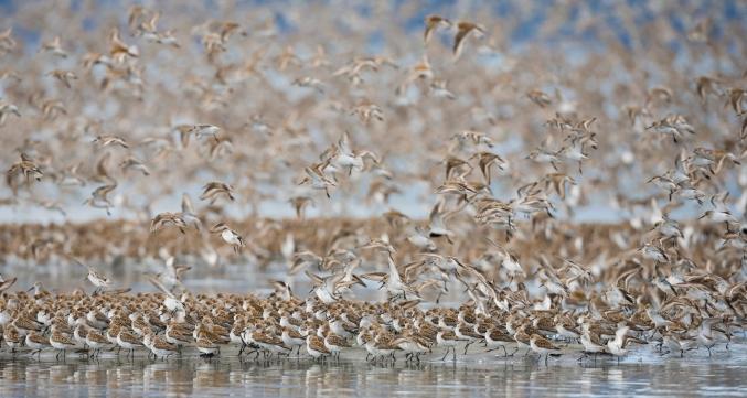 Spring Wildlife Bird Migration Alaska