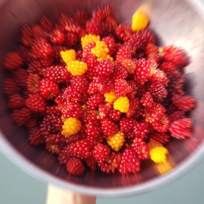 Wild Salmon Berries