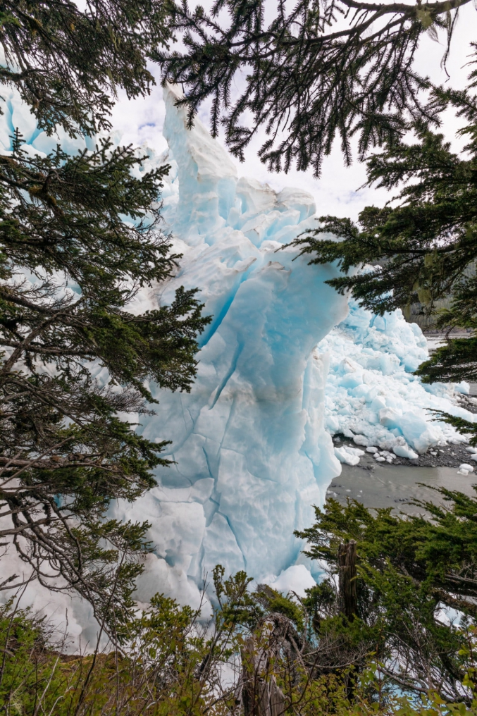 Glacier Between The Trees