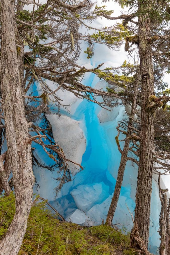Glacier Next To Trees