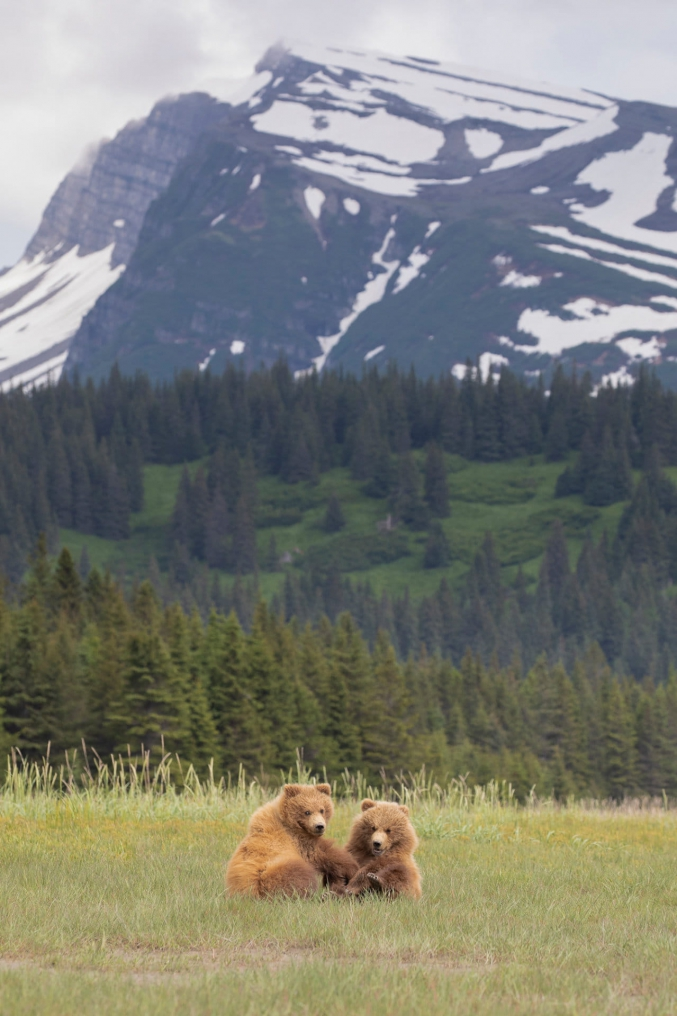 Bear Photography Trips With Discovery Voyages