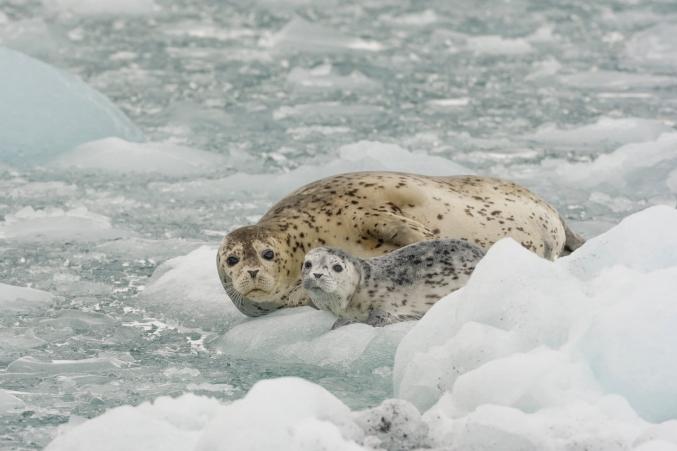 Alaska Photo Tours