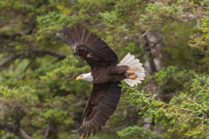 Wildlife Photo Trips AK