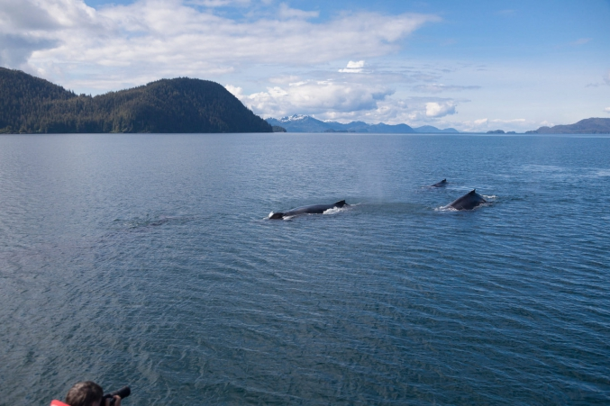 Alaska Whale Watching Family Tours