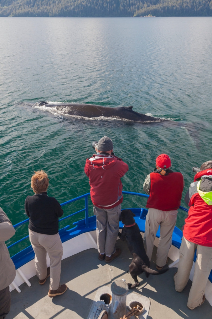Prince William Sound Whale Watching Tours