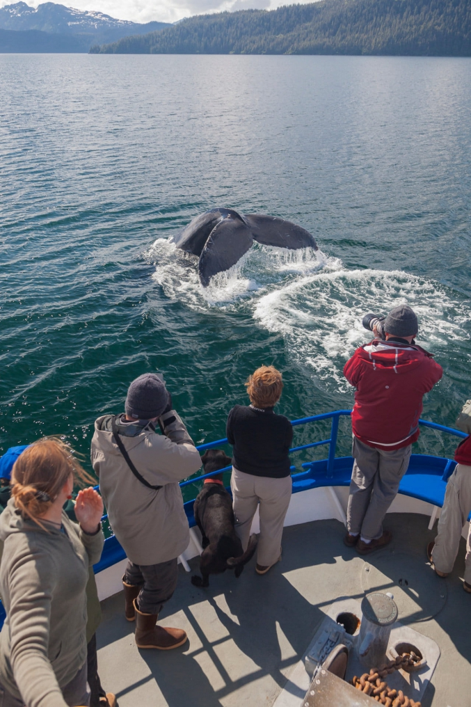 Whale Watching Cruise Alaska